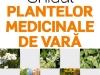 Ghidul plantelor medicinale de vara ~~ carticica vanduta impreuna cu Femeia de azi din 29 Iulie 2011