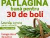 Sanatatea de azi ~~ Patlagina buna pentru 30 de boli ~~ Martie 2012