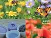Plicuri cu seminte de flori, cadoul revistei CASA SI GRADINA, editia Aprilie 2013