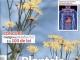 Click Sanatate ~~ Plantele care calmeaza durerile ~~ Aprilie 2015 ~~ Pret: 2,50 lei