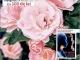 Click! Sanatate ~~ Remedii inedite cu trandafiri ~~ August 2015 ~~ Pret: 2,50 lei