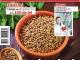 Click Sanatate ~~ Coriandrul reduce balonarea ~~ Februarie 2016 ~~ Pret: 2,50 lei