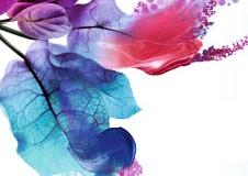 Oferta Yves Rocher pe internet pentru luna August 2014