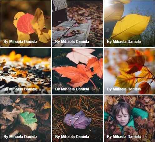 21 de zile cu poze despre frumusetea frunzelor toamnei