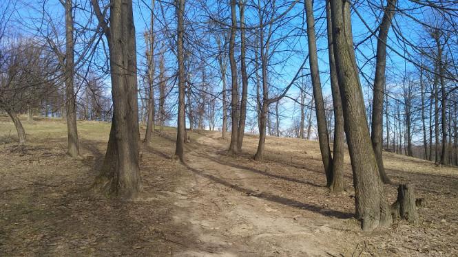Copaci Primavara