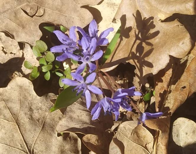 Flori mov in padure