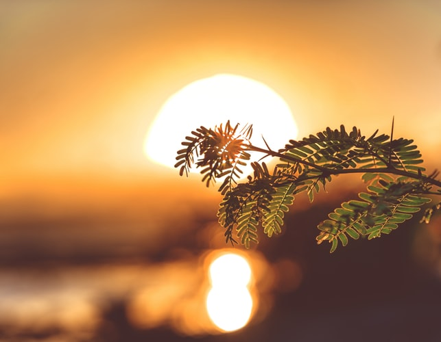 Viața și soarele