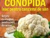 Sanatatea de azi ~~ Conopida, leac pentru cancerul de san ~~ Martie 2013