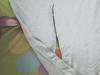 Pantalonii sport cadou la revista Joy :: August 2009