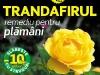 Sanatatea de azi ~~ Trandafirul pentru plamani ~~ Septembrie 2010