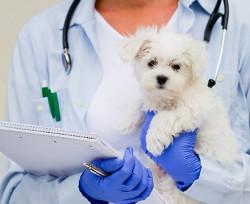 Clinica veterinara in Bucuresti
