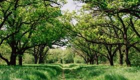 Parcul verde de primavara