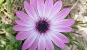 Flore de primavara